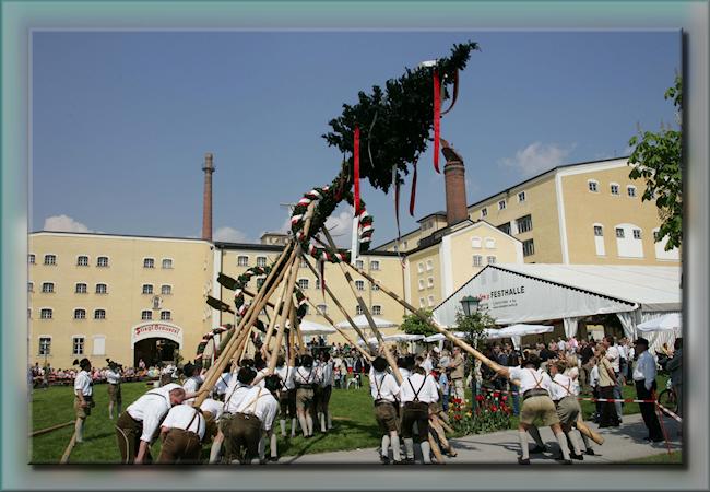 Meiboom in Duitsland